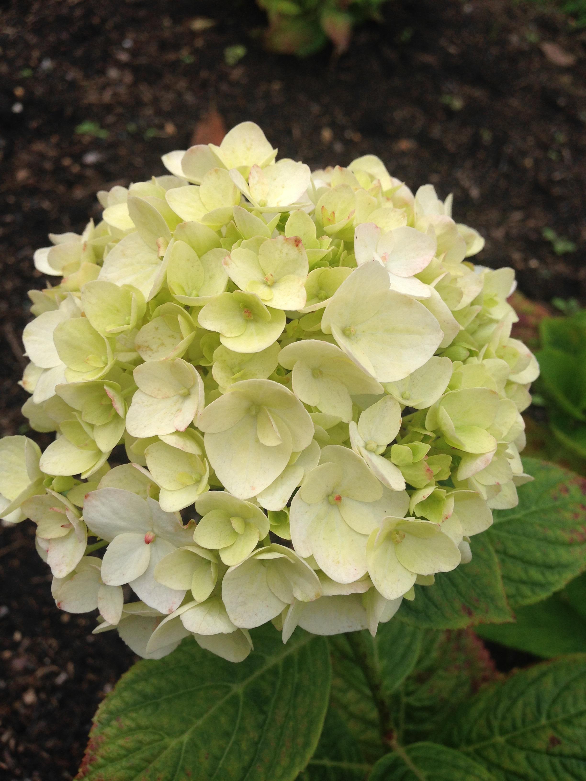 September 2015 Bouquets And Butterflies Blog